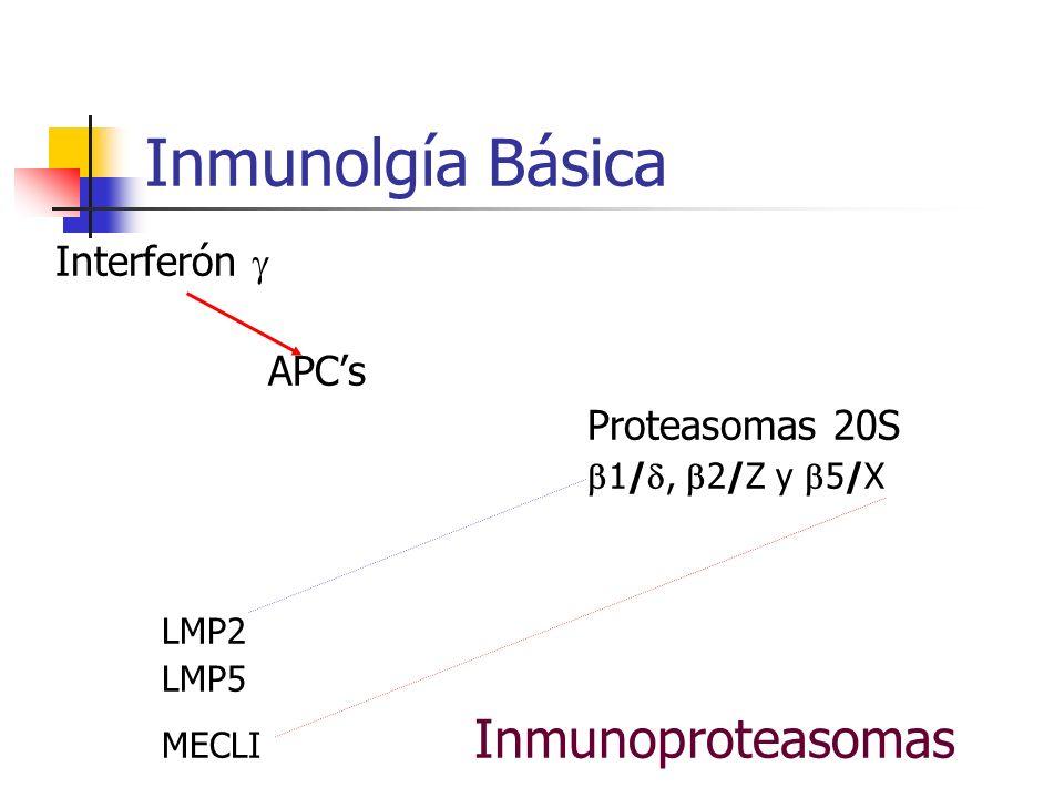 Inmunolgía Básica Interferón  APC's Proteasomas 20S LMP2