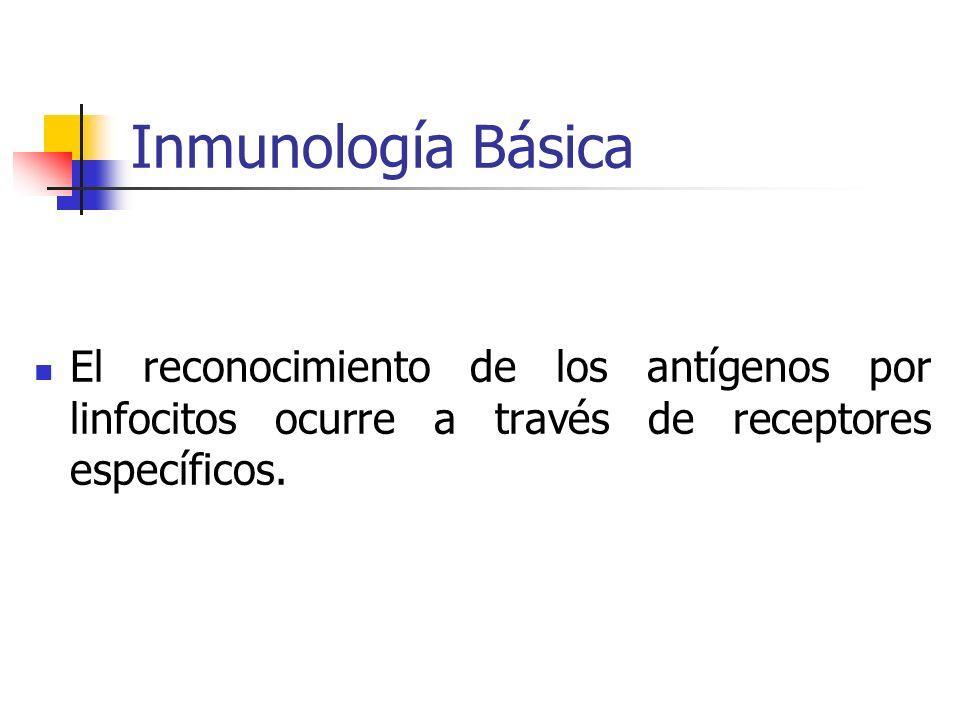 Inmunología BásicaEl reconocimiento de los antígenos por linfocitos ocurre a través de receptores específicos.
