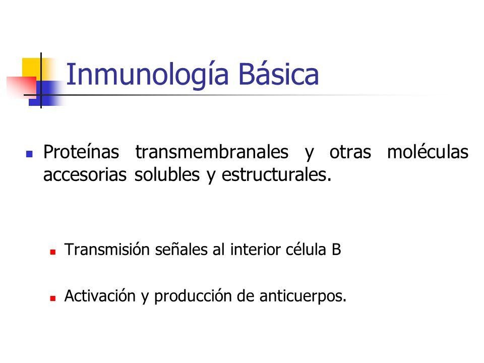 Inmunología Básica Proteínas transmembranales y otras moléculas accesorias solubles y estructurales.