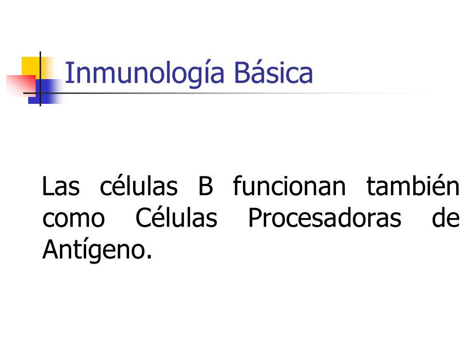 Inmunología Básica Las células B funcionan también como Células Procesadoras de Antígeno.