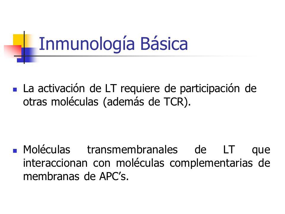 Inmunología Básica La activación de LT requiere de participación de otras moléculas (además de TCR).