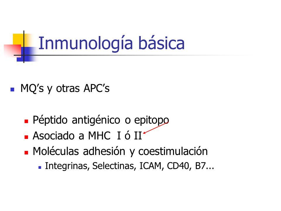 Inmunología básica MQ's y otras APC's Péptido antigénico o epitopo