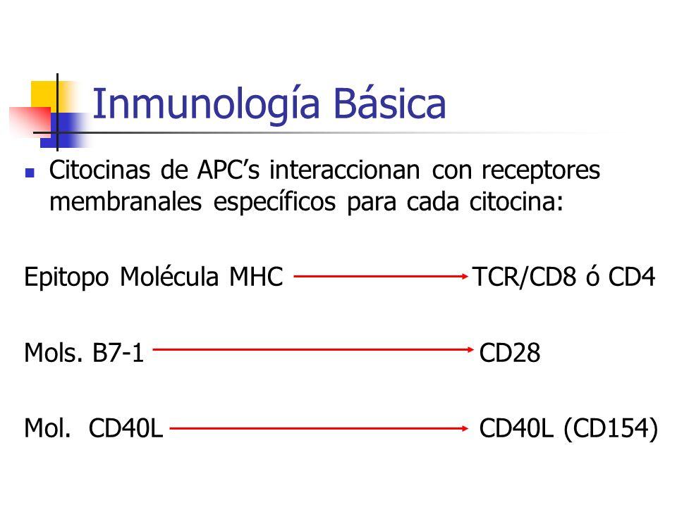 Inmunología Básica Citocinas de APC's interaccionan con receptores membranales específicos para cada citocina: