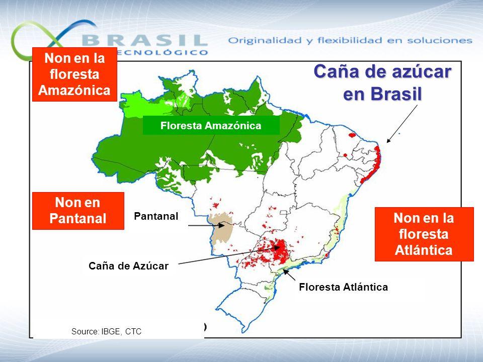 Caña de azúcar en Brasil