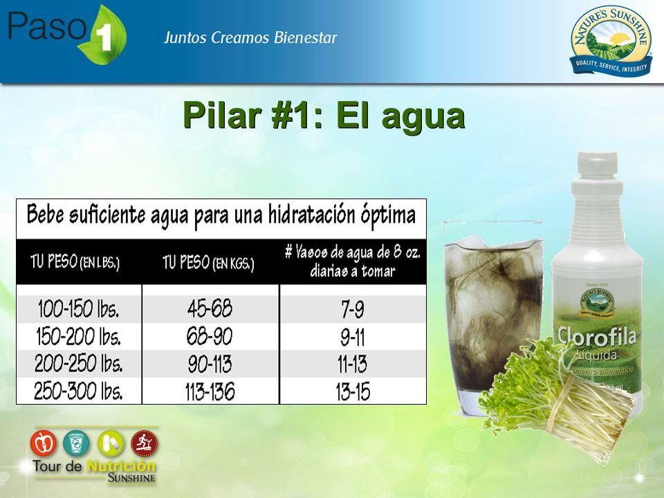 Pilar #1: El agua