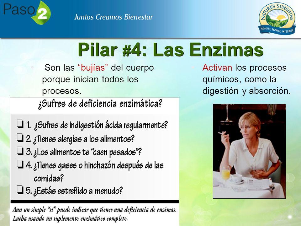Pilar #4: Las Enzimas Son las bujías del cuerpo porque inician todos los procesos.