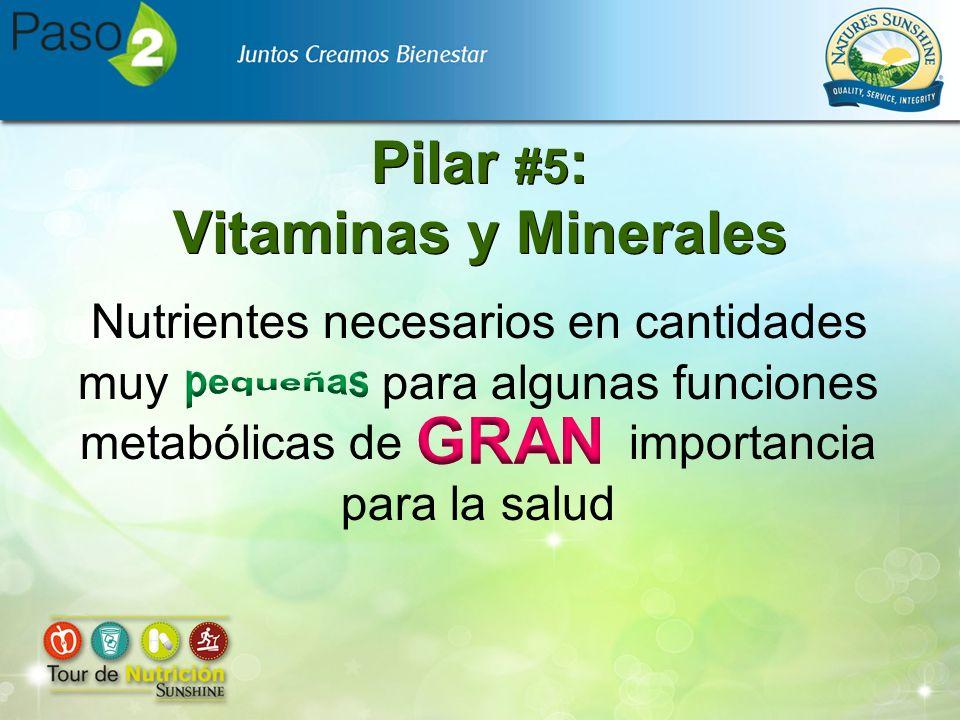 Pilar #5: Vitaminas y Minerales