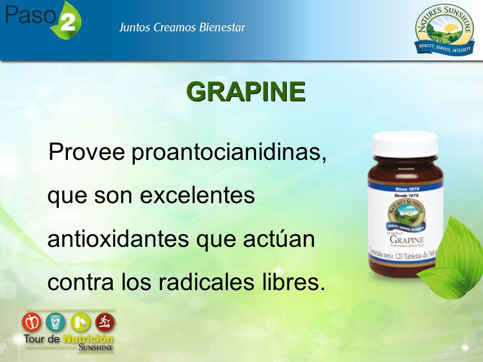 GRAPINE Provee proantocianidinas, que son excelentes antioxidantes que actúan contra los radicales libres.