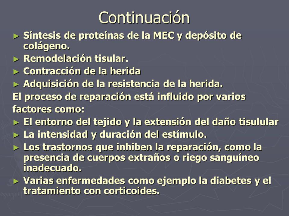 Continuación Síntesis de proteínas de la MEC y depósito de colágeno.