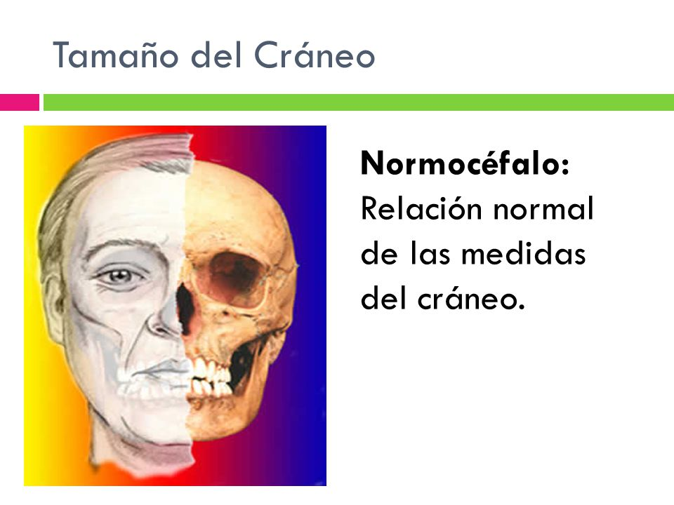 Tamaño del Cráneo Normocéfalo: