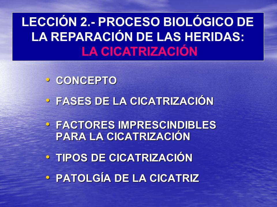 LECCIÓN 2.- PROCESO BIOLÓGICO DE LA REPARACIÓN DE LAS HERIDAS: