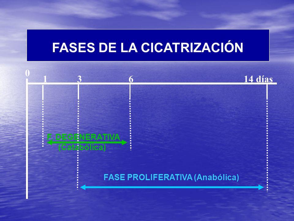 FASES DE LA CICATRIZACIÓN