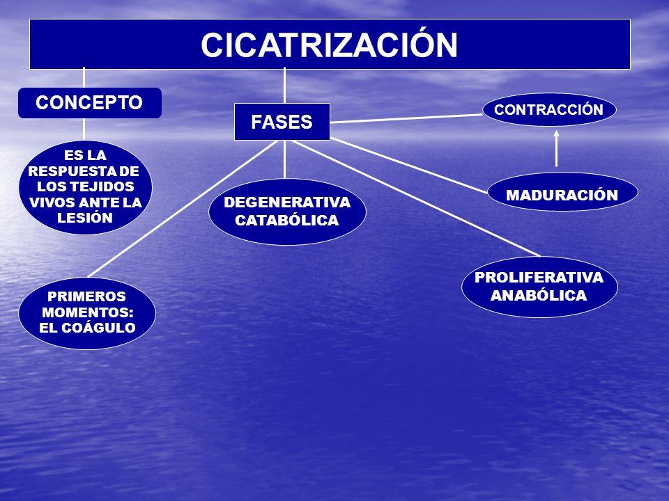 CICATRIZACIÓN CONCEPTO FASES CONTRACCIÓN MADURACIÓN DEGENERATIVA
