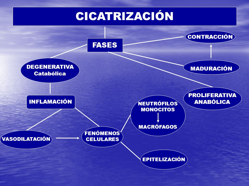 CICATRIZACIÓN FASES CONTRACCIÓN DEGENERATIVA MADURACIÓN Catabólica