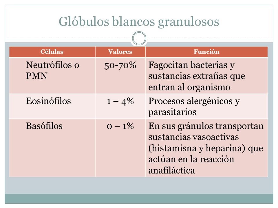 Glóbulos blancos granulosos