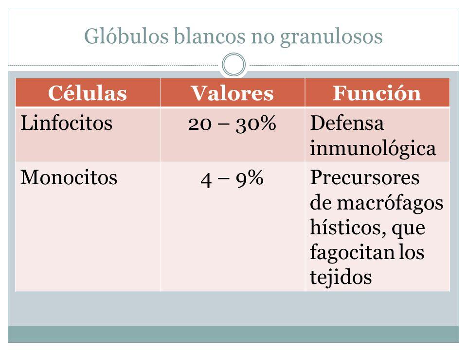Glóbulos blancos no granulosos