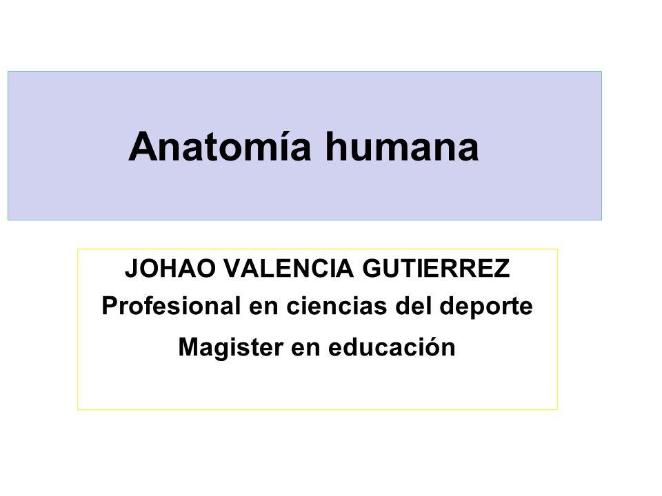 JOHAO VALENCIA GUTIERREZ Profesional en ciencias del deporte - ppt ...
