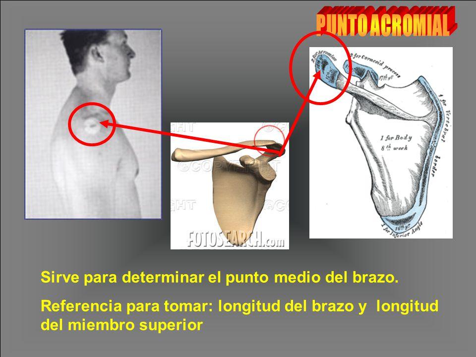 PUNTO ACROMIAL Sirve para determinar el punto medio del brazo.