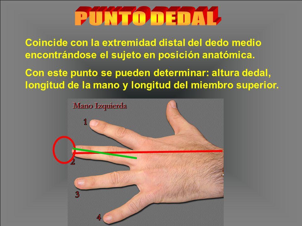 PUNTO DEDAL Coincide con la extremidad distal del dedo medio encontrándose el sujeto en posición anatómica.