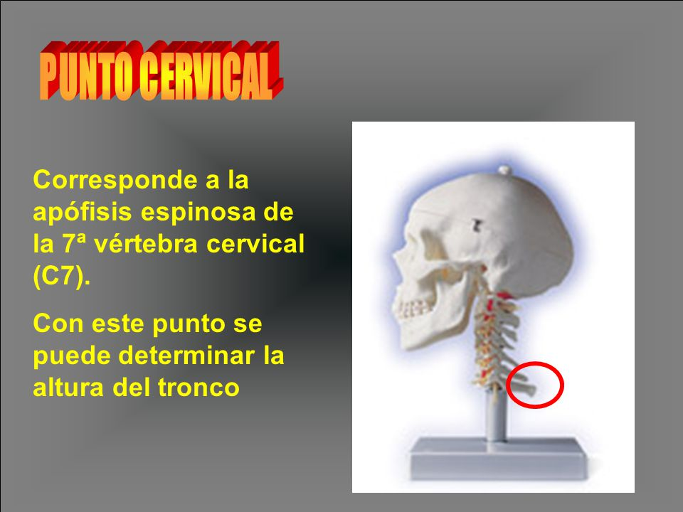 Corresponde a la apófisis espinosa de la 7ª vértebra cervical (C7).