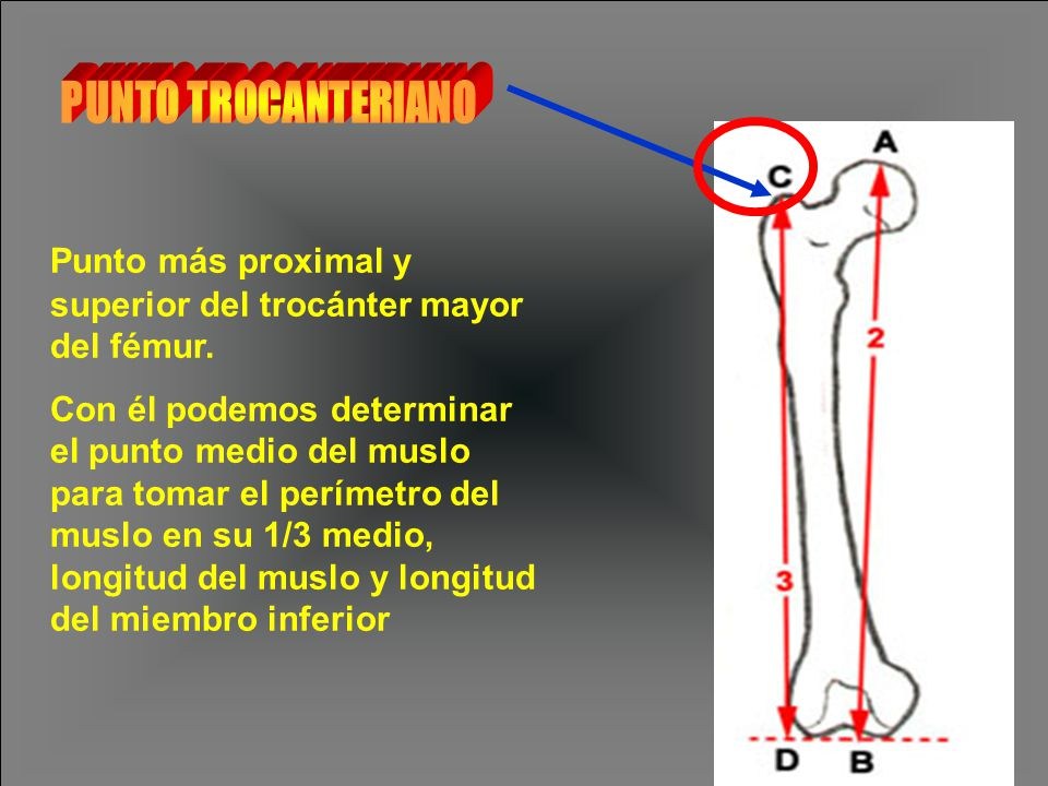 Punto más proximal y superior del trocánter mayor del fémur.