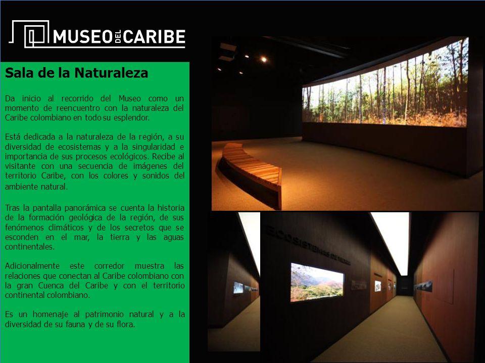 Sala de la Naturaleza Da inicio al recorrido del Museo como un momento de reencuentro con la naturaleza del Caribe colombiano en todo su esplendor.