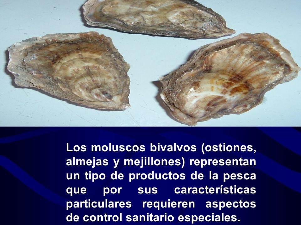 Los moluscos bivalvos (ostiones, almejas y mejillones) representan un tipo de productos de la pesca que por sus características particulares requieren aspectos de control sanitario especiales.