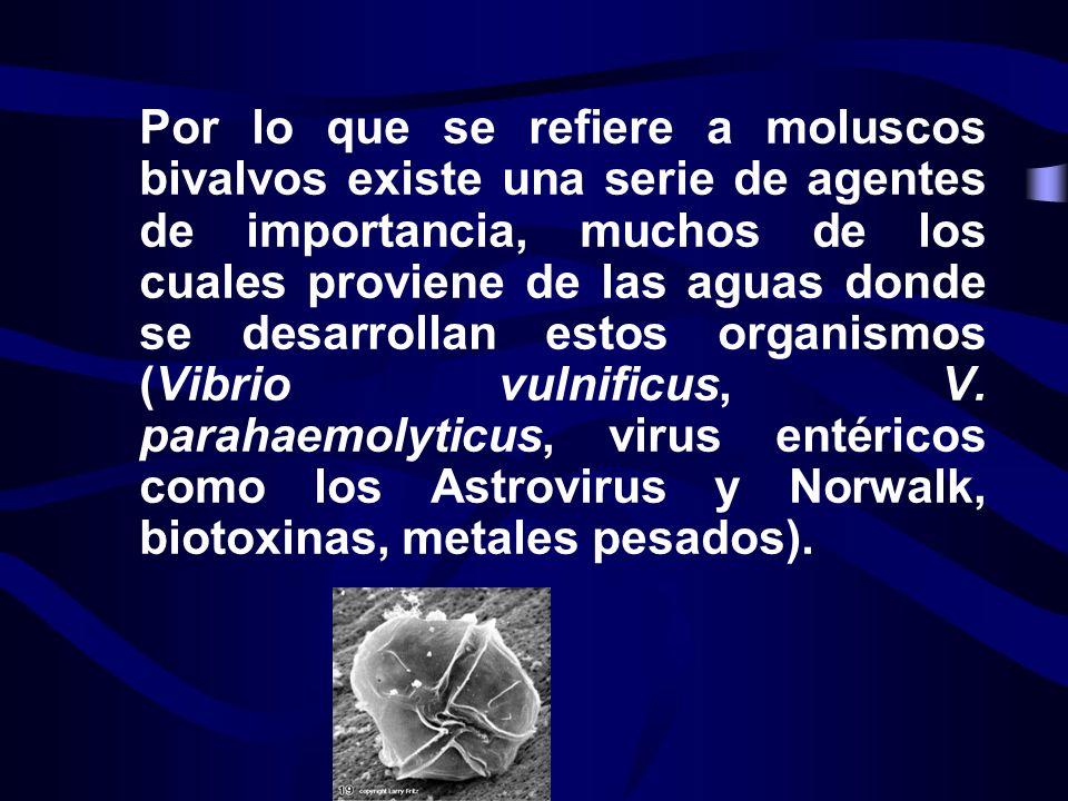 Por lo que se refiere a moluscos bivalvos existe una serie de agentes de importancia, muchos de los cuales proviene de las aguas donde se desarrollan estos organismos (Vibrio vulnificus, V.
