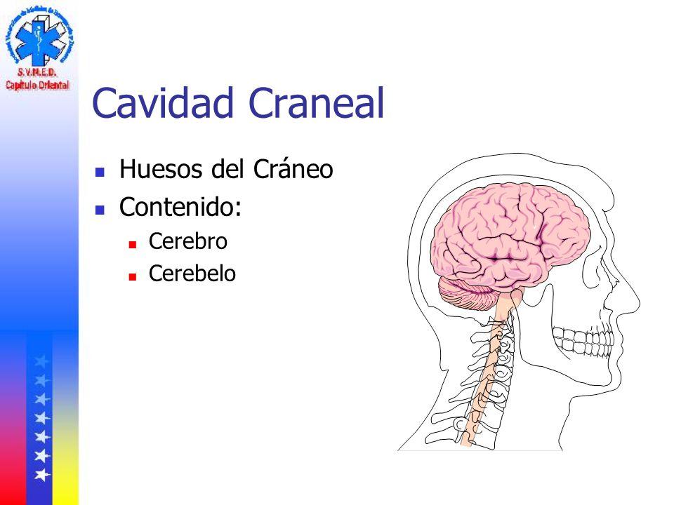 Cavidad Craneal Huesos del Cráneo Contenido: Cerebro Cerebelo