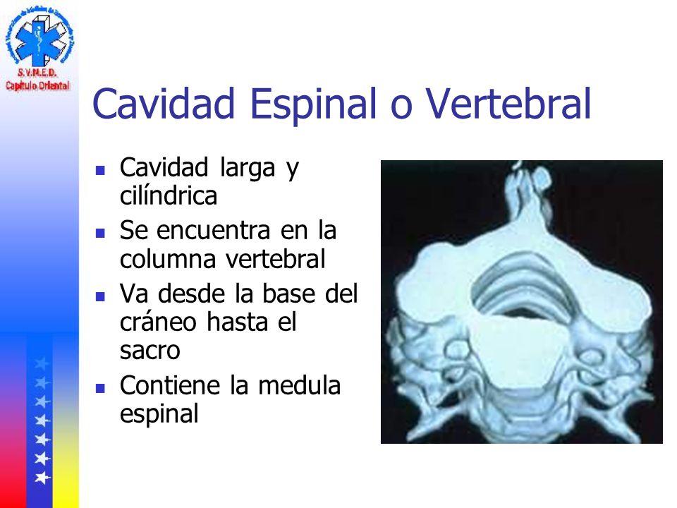 Cavidad Espinal o Vertebral