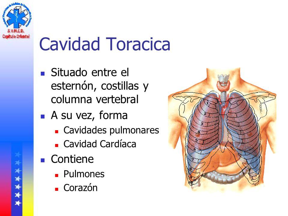 Cavidad Toracica Situado entre el esternón, costillas y columna vertebral. A su vez, forma. Cavidades pulmonares.