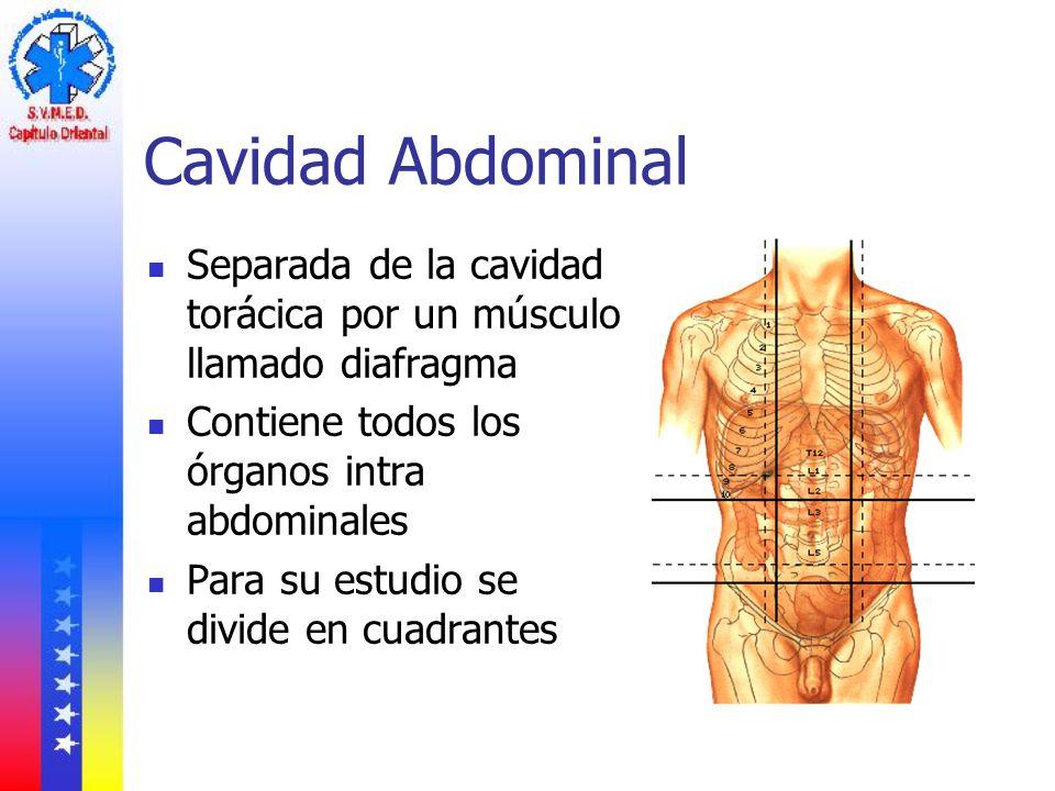 Cavidad Abdominal Separada de la cavidad torácica por un músculo llamado diafragma. Contiene todos los órganos intra abdominales.