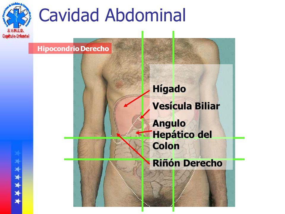 Cavidad Abdominal Hígado Vesícula Biliar Angulo Hepático del Colon