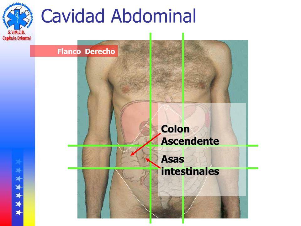 Cavidad Abdominal Flanco Derecho Colon Ascendente Asas intestinales