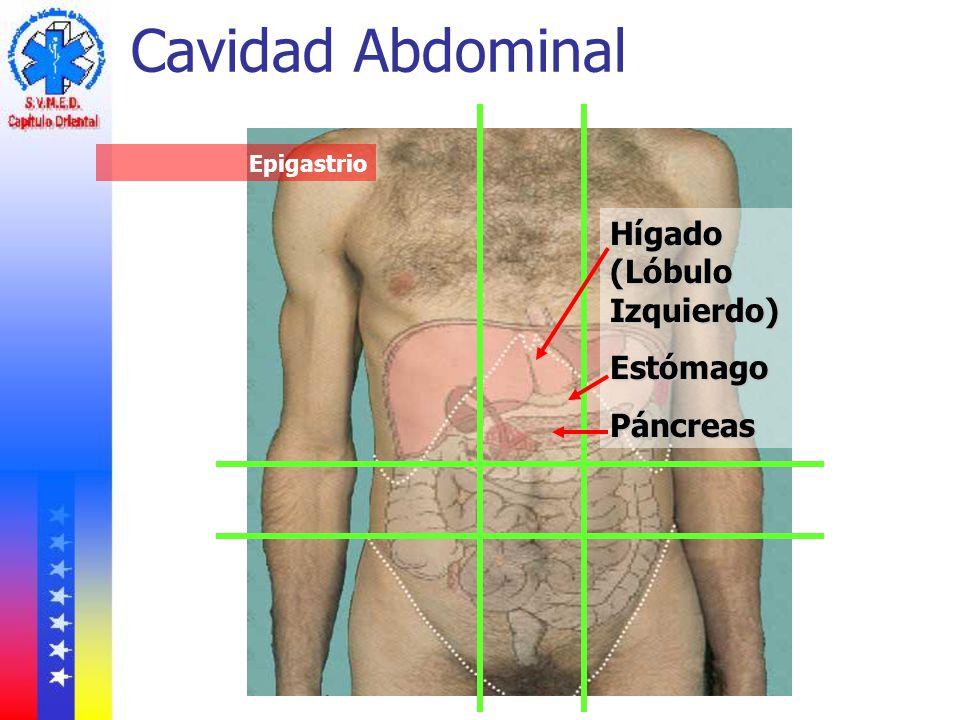 Cavidad Abdominal Hígado (Lóbulo Izquierdo) Estómago Páncreas