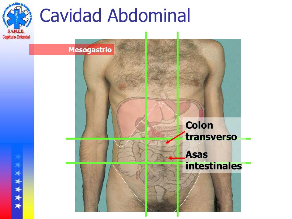 Cavidad Abdominal Mesogastrio Colon transverso Asas intestinales