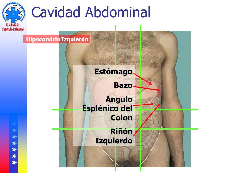 Cavidad Abdominal Estómago Bazo Angulo Esplénico del Colon