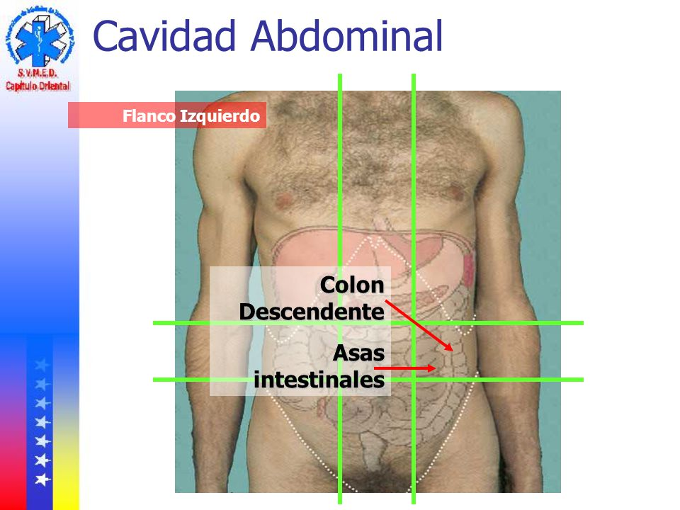 Cavidad Abdominal Flanco Izquierdo Colon Descendente Asas intestinales