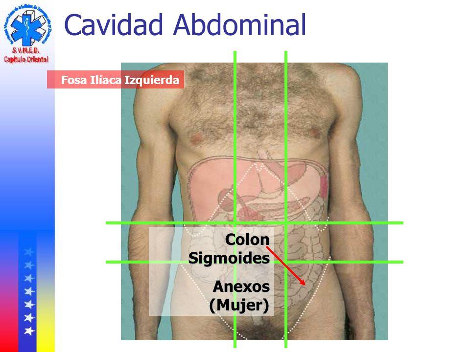 Cavidad Abdominal Fosa Ilíaca Izquierda Colon Sigmoides Anexos (Mujer)