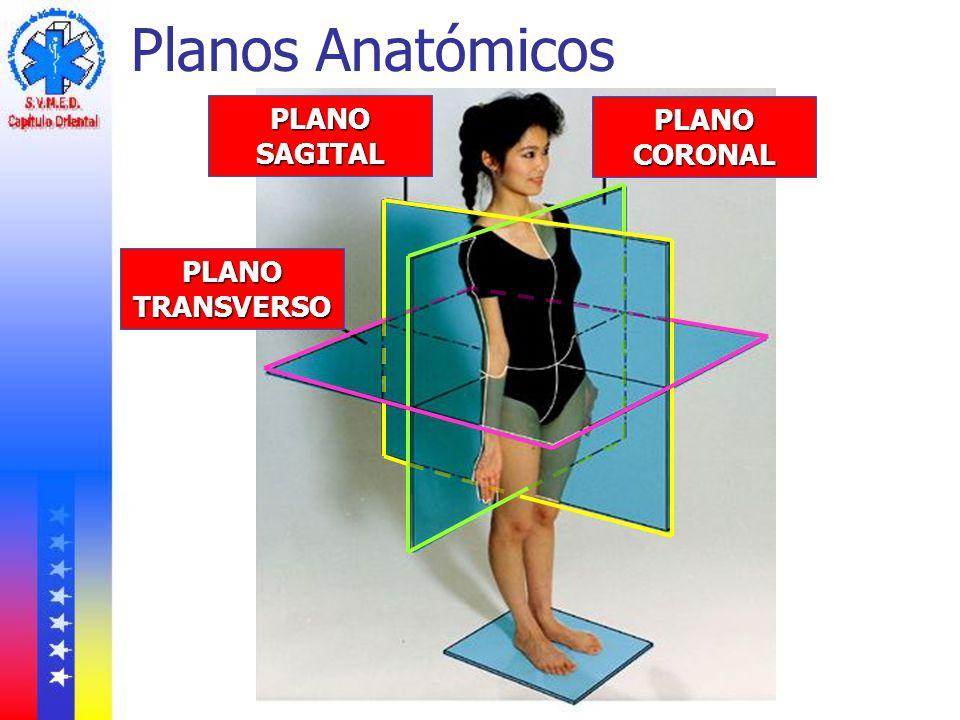 Planos Anatómicos PLANO SAGITAL PLANO CORONAL PLANO TRANSVERSO