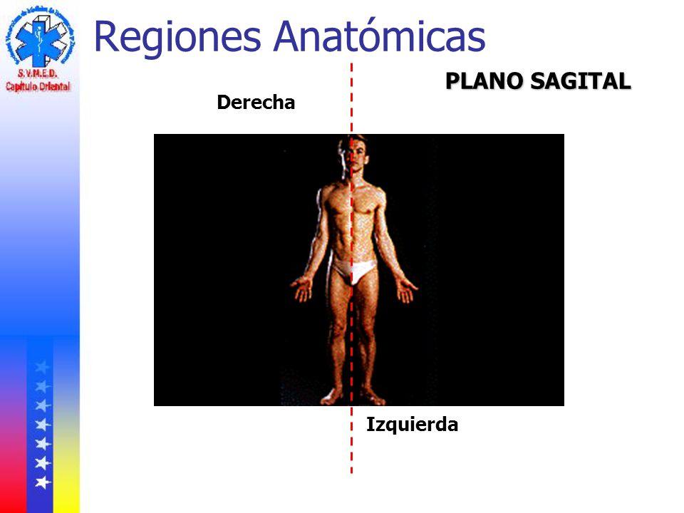 Regiones Anatómicas PLANO SAGITAL Derecha Izquierda