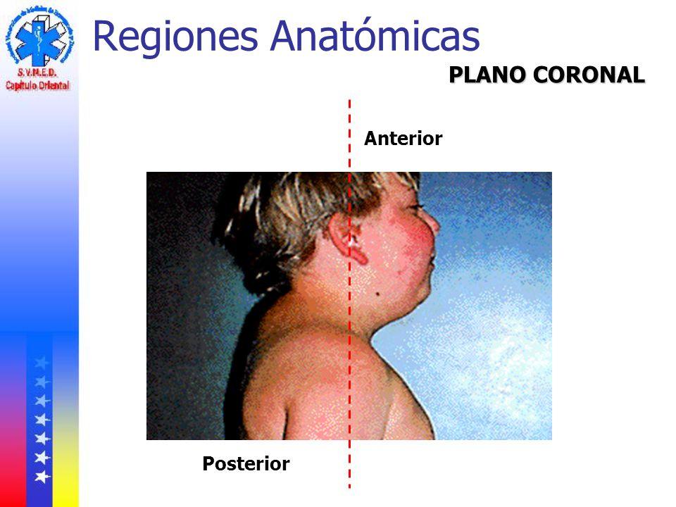 Regiones Anatómicas PLANO CORONAL Anterior Posterior