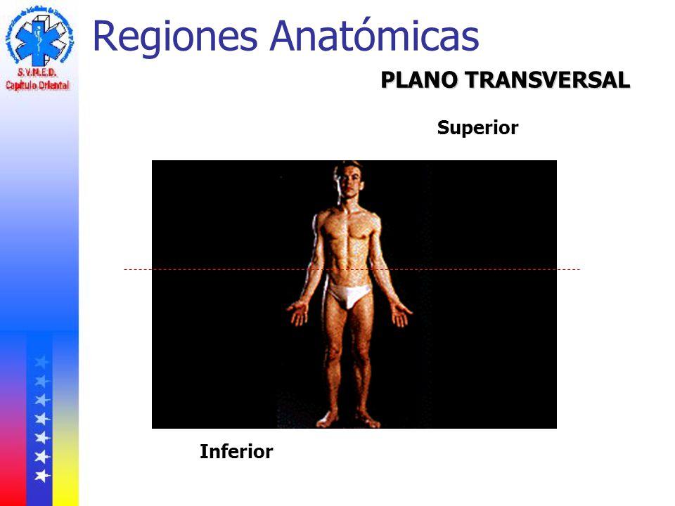 Regiones Anatómicas PLANO TRANSVERSAL Superior Inferior