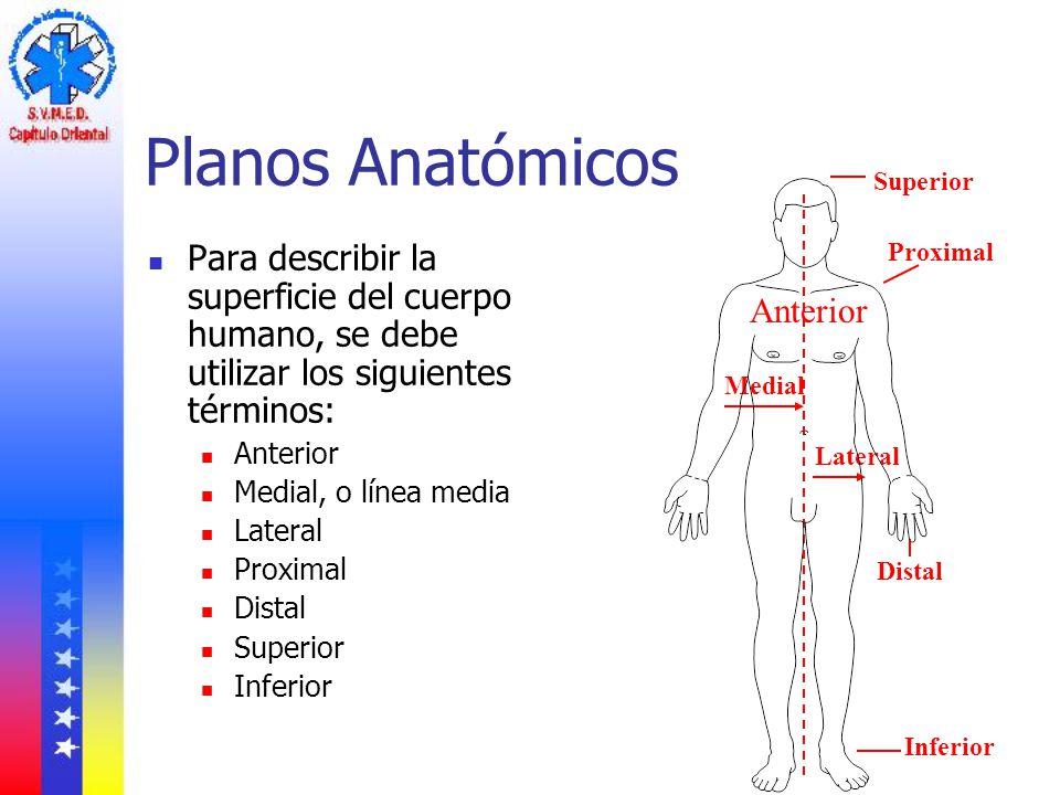 Planos Anatómicos Superior. Para describir la superficie del cuerpo humano, se debe utilizar los siguientes términos: