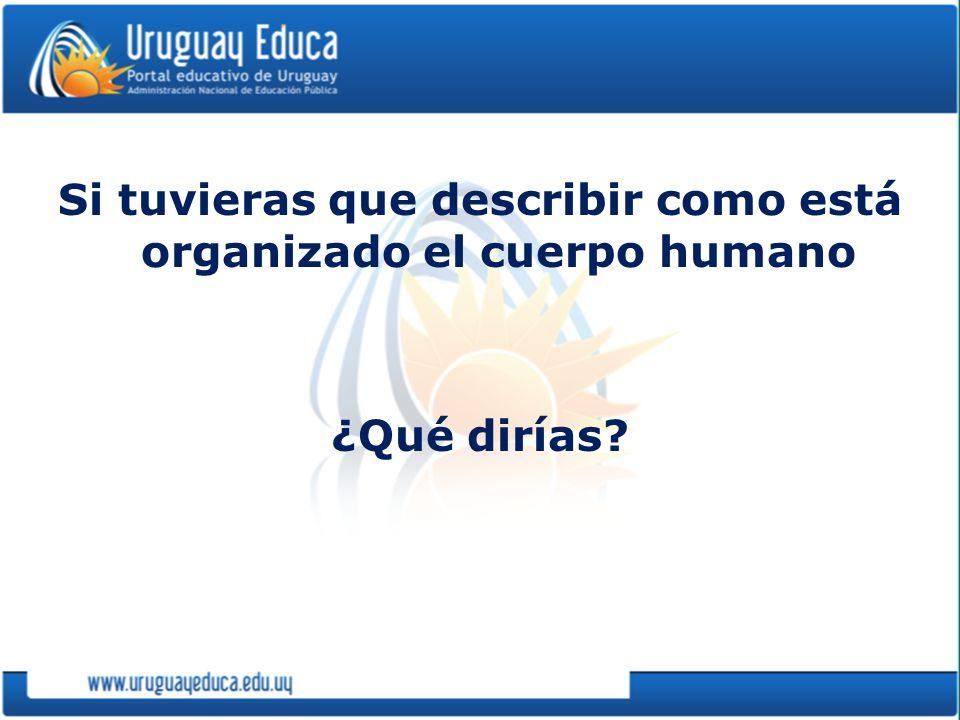 Si tuvieras que describir como está organizado el cuerpo humano ¿Qué dirías