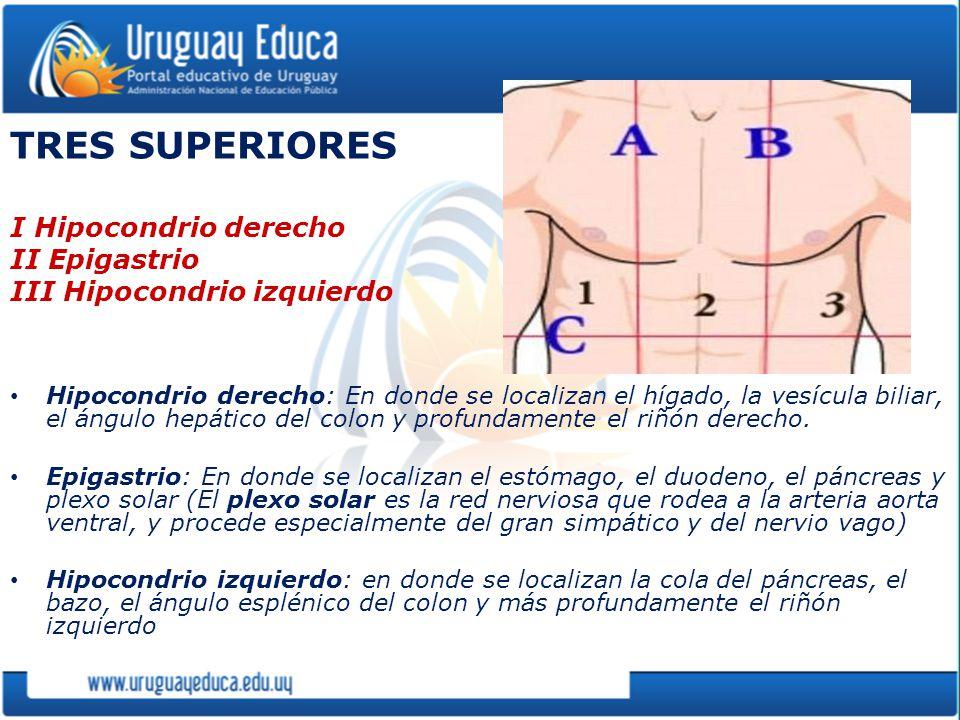 TRES SUPERIORES I Hipocondrio derecho II Epigastrio