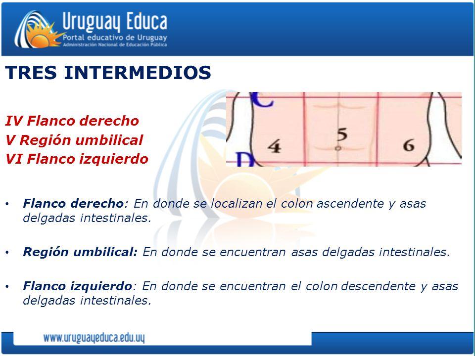 TRES INTERMEDIOS IV Flanco derecho V Región umbilical