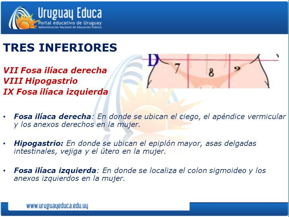 TRES INFERIORES VII Fosa ilíaca derecha VIII Hipogastrio