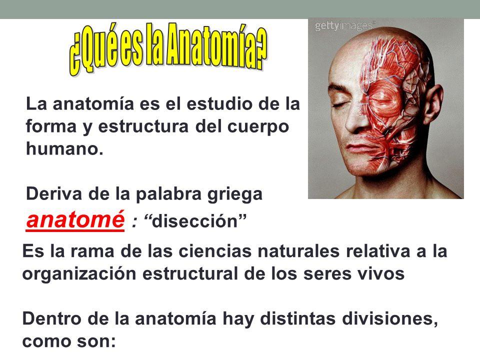 La anatomía es el estudio de la forma y estructura del cuerpo humano.