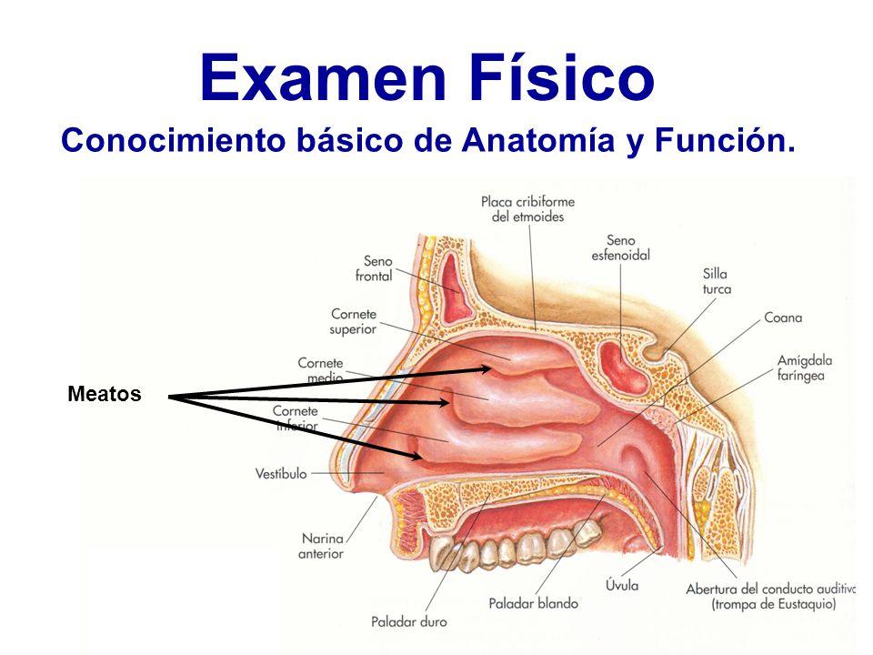 Excepcional Es La Anatomía Duro Motivo - Anatomía de Las Imágenesdel ...